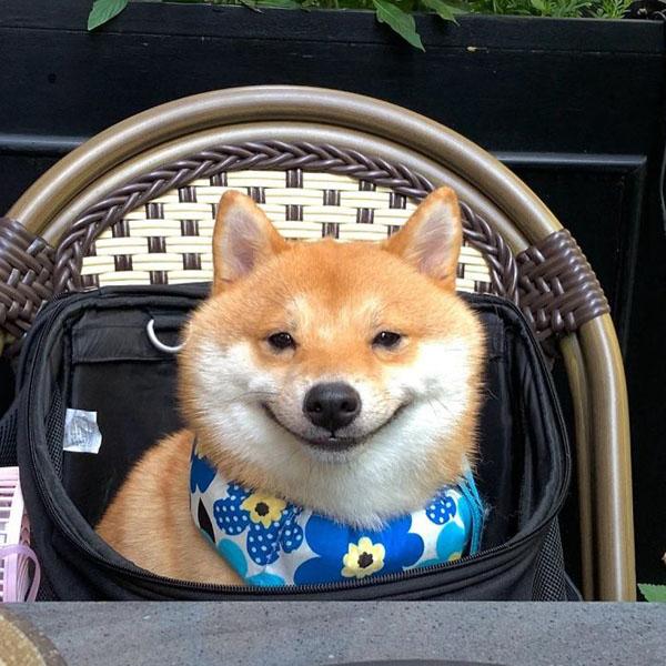 Chú chó sở hữu biểu cảm 'tấu hài', thấy đồ ăn là cười toe toét 7