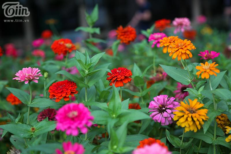 Nhiều bồn hoa được trồng mới màu sắc rực rỡ.