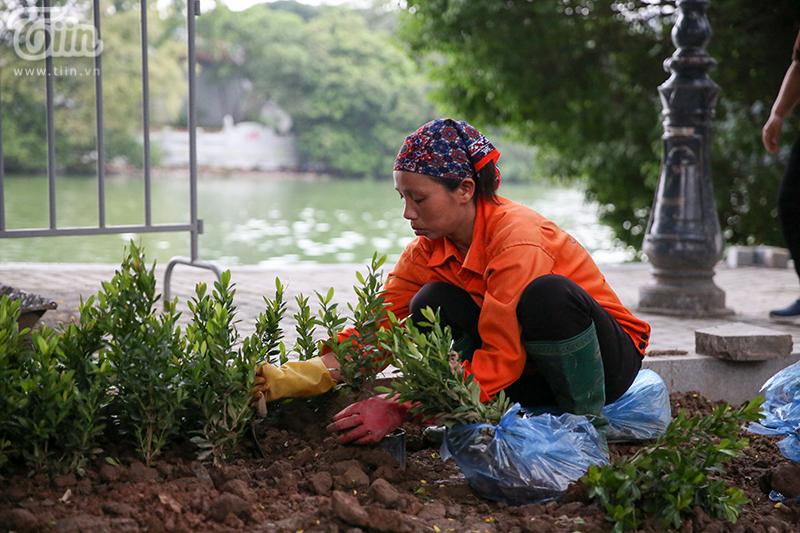 Vườn hoa hồ Hoàn Kiếm được 'thay áo mới' đẹp ngỡ ngàng trong tiết thu 9