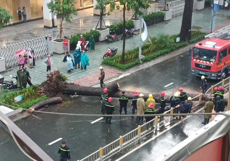Hiện trường cây cổ thụ lớn ngã đổ tại quận 10. Ảnh: H.T