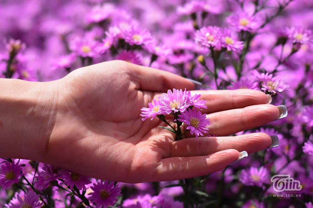 Vườn thạch thảo đẹp mộng mị như phim Hàn hứa hẹn thành tâm điểm check-in ở Đà thành 7