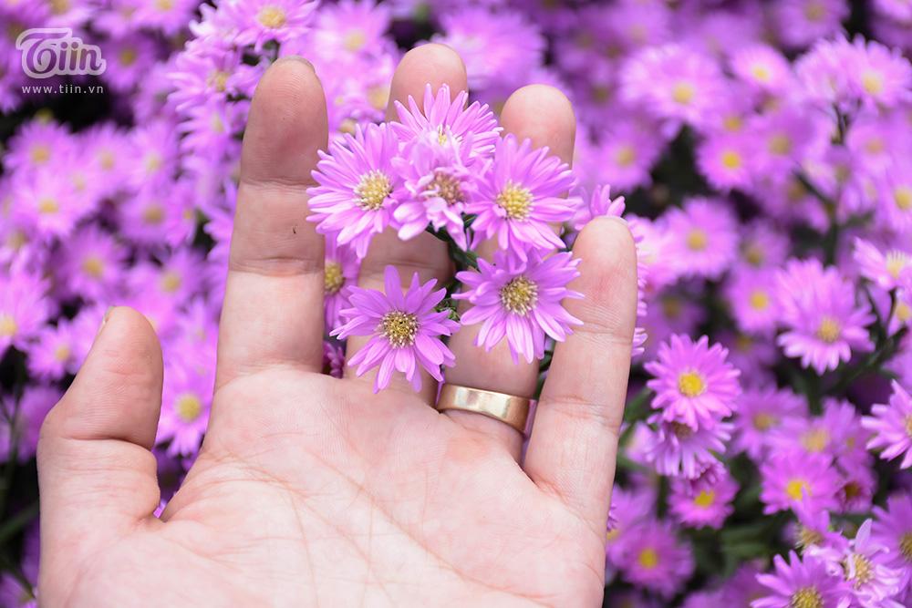 Vườn thạch thảo đẹp mộng mị như phim Hàn hứa hẹn thành tâm điểm check-in ở Đà thành 14