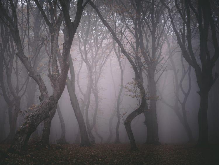 Dạ Quỷ Rừng Sâu lấy bối cảnh tại khu rừng rậm phía bắc St. Petersburg
