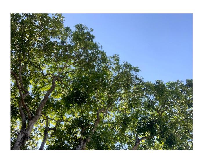 Trời thu Long Biên xanh ngắt một màu...