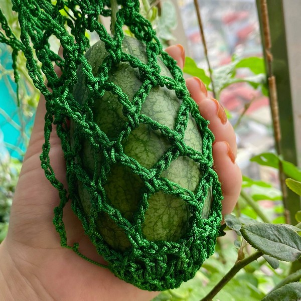 Giàn dưa hấu trồng ở ban công của cặp vợ chồng trẻ cho thu hoạch ngoài mong đợi: Quả gần 1kg đỏ mọng, ít hạt 10