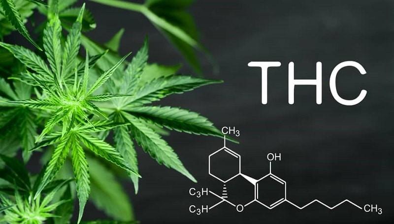 THC có trong cần sa