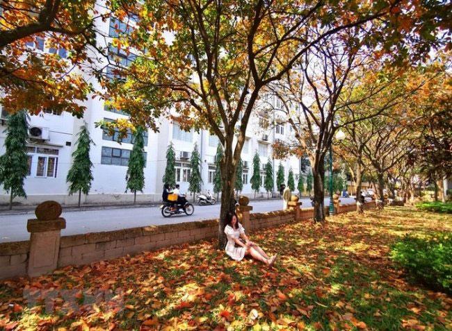 Lá vàng ở trường Đại học Sư Phạm Hà Nội.