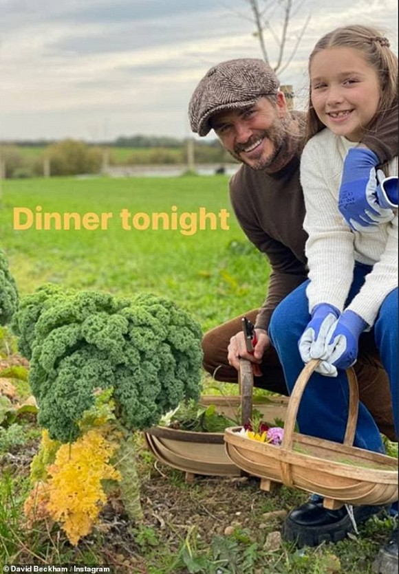 Beckham và con gái tận hưởng cuộc sống thanh bình trong một trang trại organic.