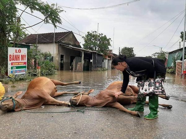 Người phụ nữ bật khóc nhìn đàn bò chết sau mưa lũ. (Ảnh: Page Dân Hương Sơn)