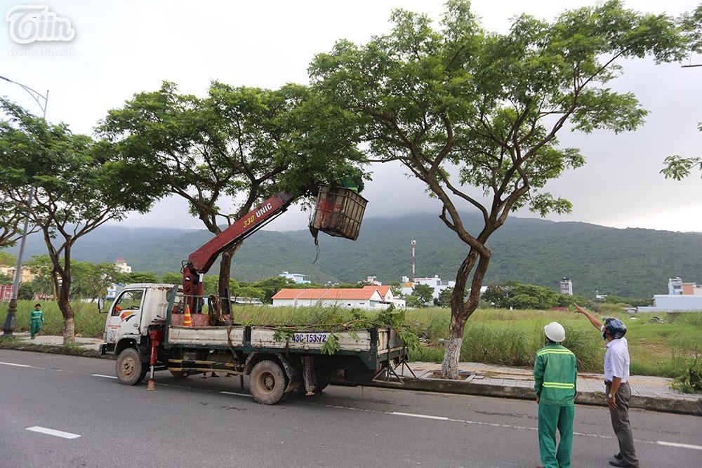 Những cây lớn được cắt tỉa cành.