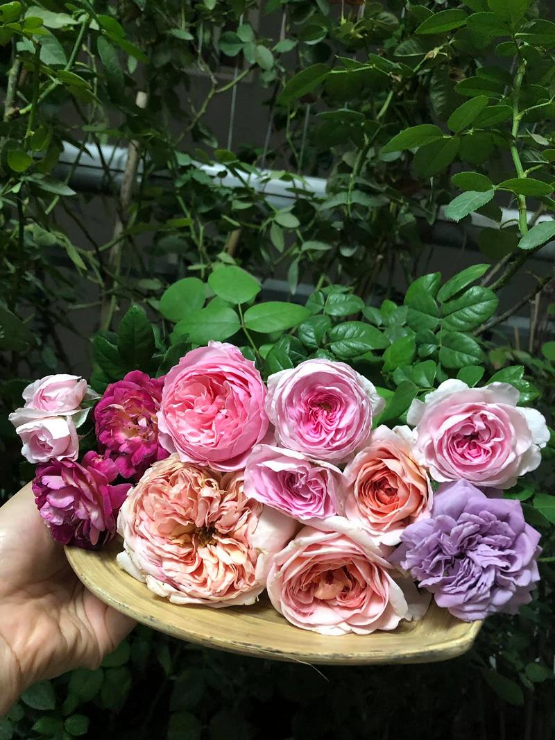 Nữ giảng viên yêu thích loài hoa giống như tên gọi của mình và thường xuyên khoe khéo thành quả trên trang cá nhân
