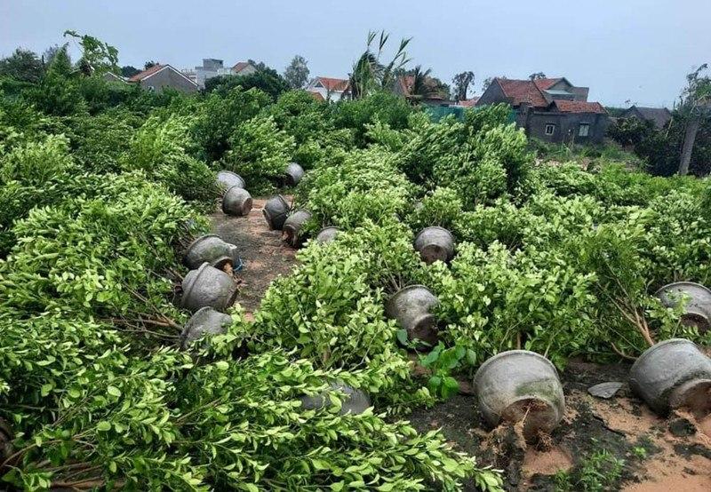 Tại các địa phương của tỉnh Phú Yên, tường nhà, cây cốibị bão đánh sập, nằm ngổn ngang.Ảnh: Fage Hội những người thích đọc tin tức 24h.