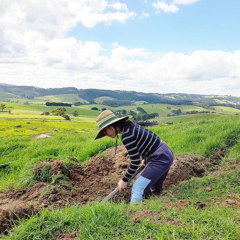 Thiếu nữ Hà thành bỏ việc theo chồng ngoại quốc về vùng nông thôn Úc, ngày ngày cuốc đất, nuôi bò 2