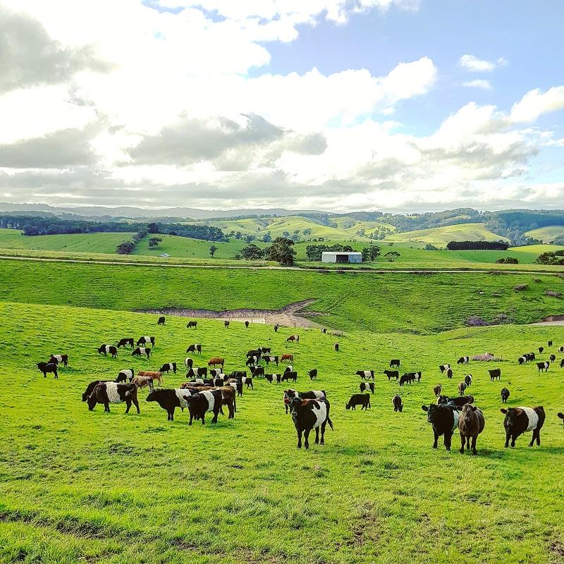 Thiếu nữ Hà thành bỏ việc theo chồng ngoại quốc về vùng nông thôn Úc, ngày ngày cuốc đất, nuôi bò 5