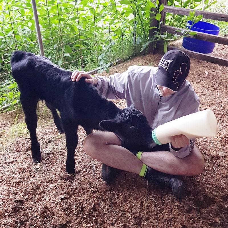 Thiếu nữ Hà thành bỏ việc theo chồng ngoại quốc về vùng nông thôn Úc, ngày ngày cuốc đất, nuôi bò 6