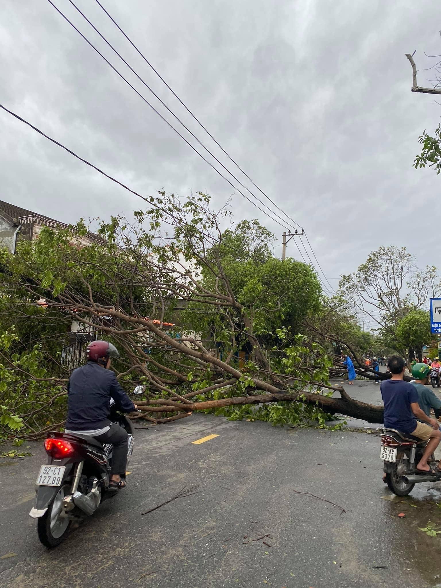 Phố cổ Hội An tan hoang sau bão số 9: Nhiều cây lớn ngã đổ chắn lối đi 2