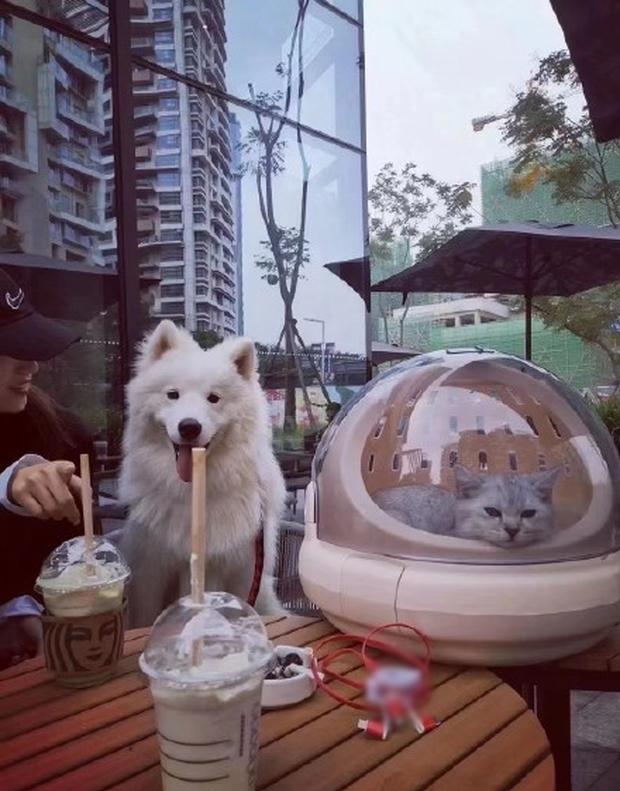 Cửa hàng cafe tặng 1 ly miễn phí cho khách dẫn theo thú cưng, cô gái mang theo hẳn 4 con cua biển đến nhận quà 0