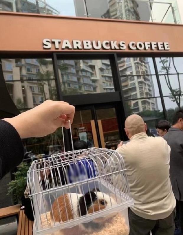Chó mèo đến cả hamster cũng được dẫn theo đến cửa hàng cafe.