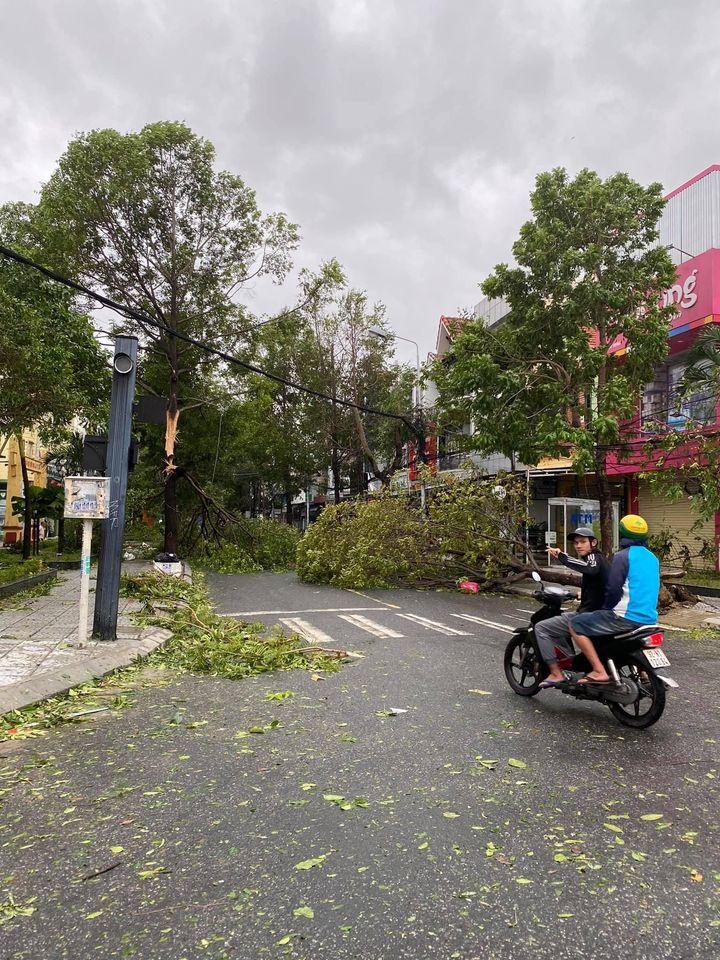 Phố cổ Hội An tan hoang sau bão số 9: Nhiều cây lớn ngã đổ chắn lối đi 6