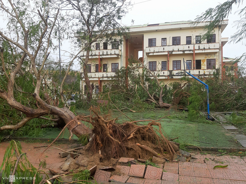 Trong khuôn viên Cao đẳng Kỹ nghệ Dung Quất, gần chục cây phượng lớn bị gẫy nhánh, bật gốc nằm ngổn ngang trong khuôn viên trường (Ảnh: VnExpress).