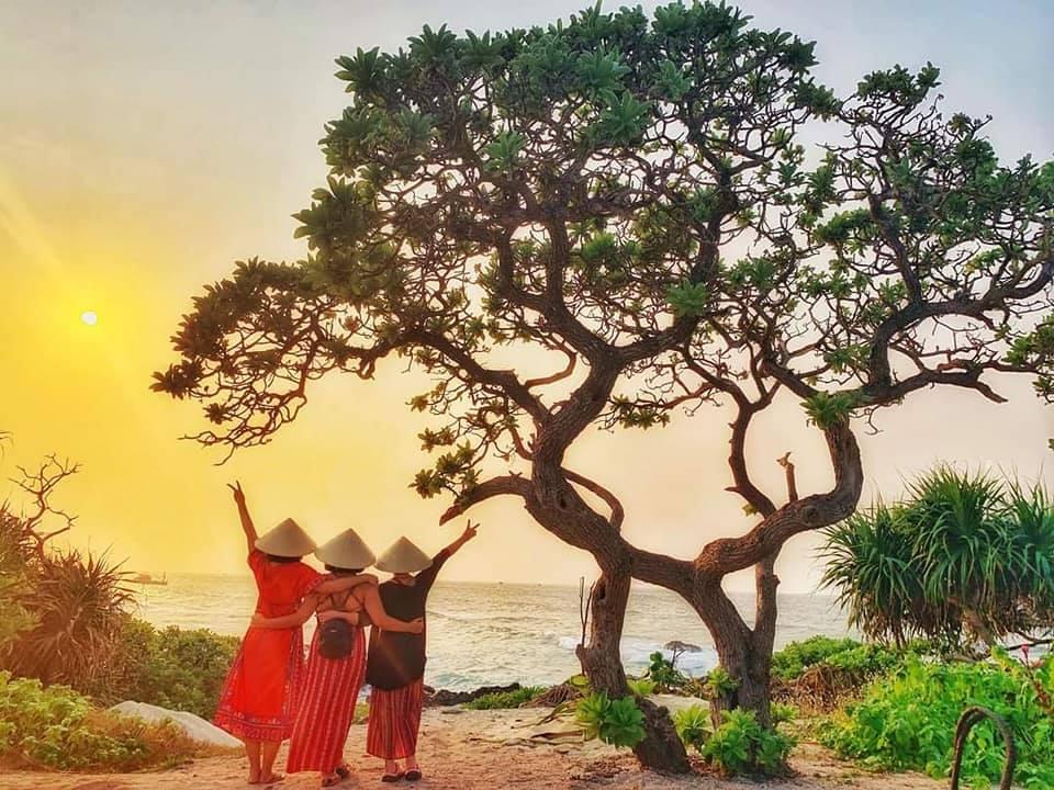 Cây cô đơn trên đảo Lý Sơn - biểu tượng của sức sống mãnh liệt bị bão số 9 quật gãy 1