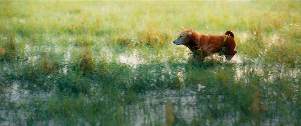 Thước phim đầu tiên của 'Cậu Vàng' được hé lộ nhưng nhìn đi nhìn lại cư dân mạng cứ thấy 'giả trân' 0