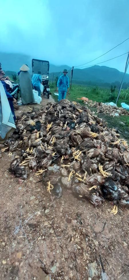 'Mọi người tới lấy gà cũng thương gia đình và giúp nhà tôi mỗi người vài ba chục...' - anh Nhàn kể