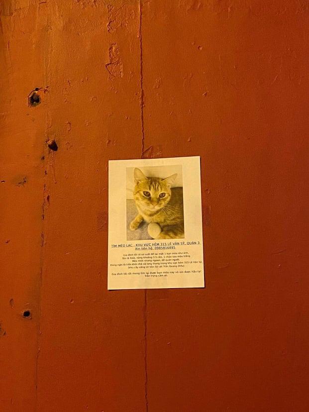 Hành trình 24 giờ tìm kiếm mèo cưng đi lạc của cô gái Sài Gòn: Cảm ơn những người hàng xóm tốt bụng 0