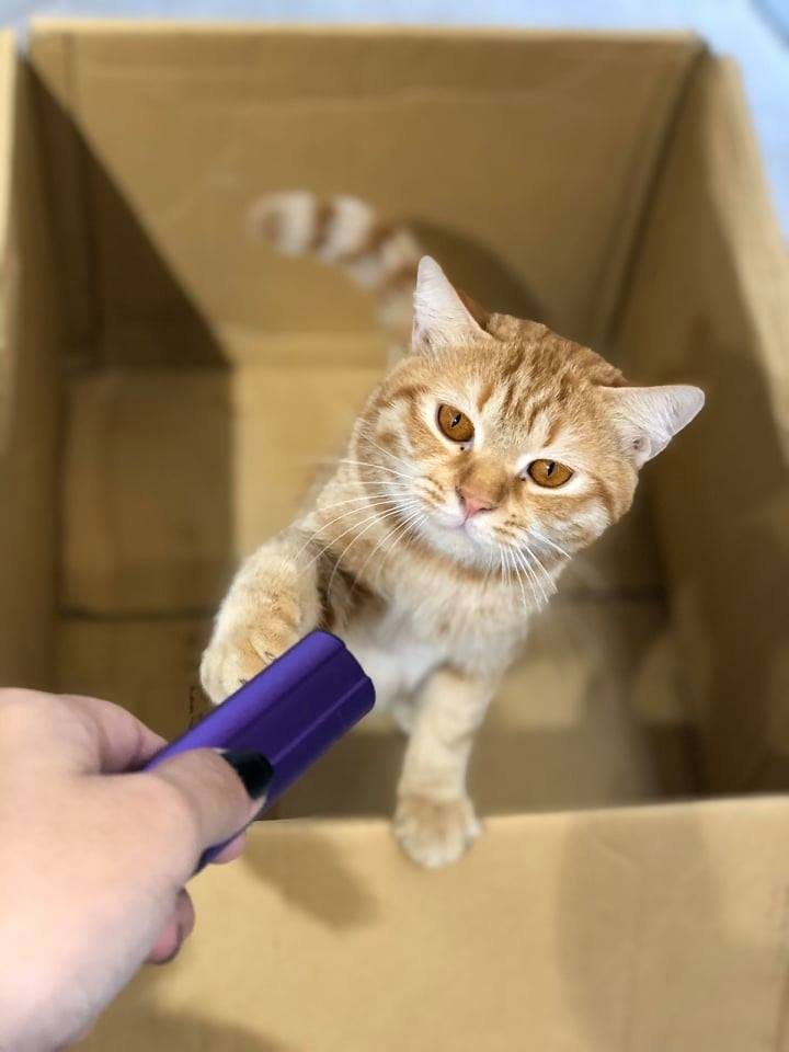 Hành trình 24 giờ tìm kiếm mèo cưng đi lạc của cô gái Sài Gòn: Cảm ơn những người hàng xóm tốt bụng 2