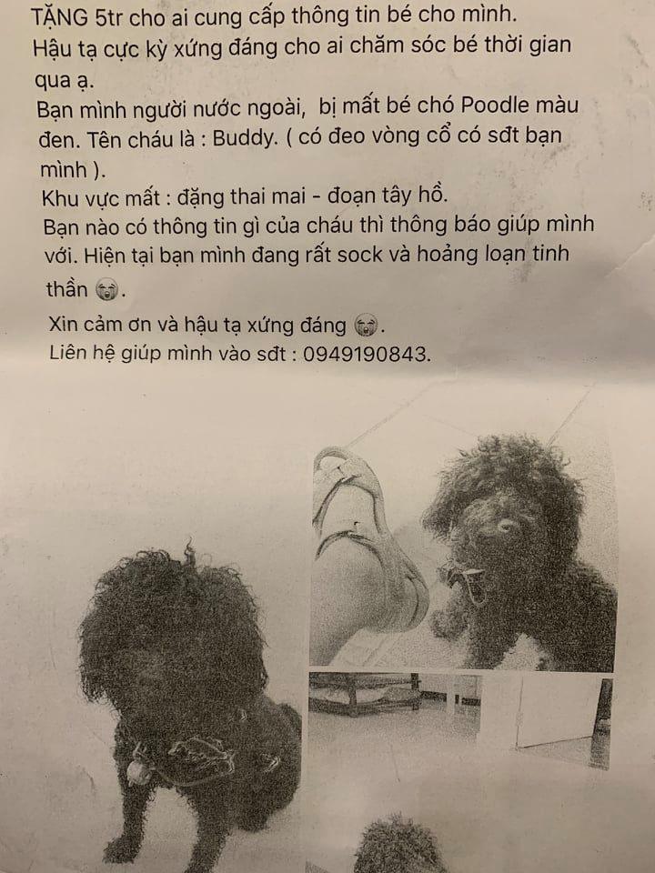 Anh Tú in ảnh kèm dòngthông tin về Buddy vàdán khắp khu vực nơi chú chó bị lạc với hy vọng sớm tìm được