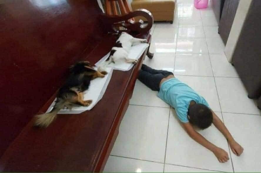 Chú chó vừa 'tịnh thân' nằm bẹp trên ghế tưởng 'băng hà' đến nơi khiến 'con Sen' khóc hết nước mắt 0