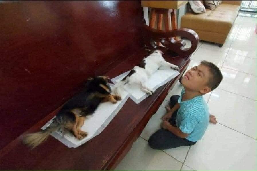 'Con Sen' nằm khóc lóc khi chú chó vừa bị thiến.