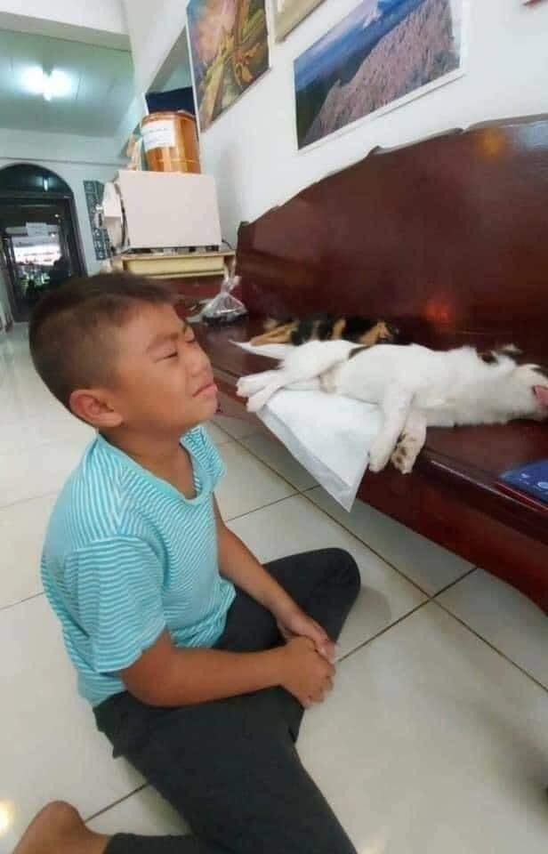 Chú chó vừa 'tịnh thân' nằm bẹp trên ghế tưởng 'băng hà' đến nơi khiến 'con Sen' khóc hết nước mắt 2