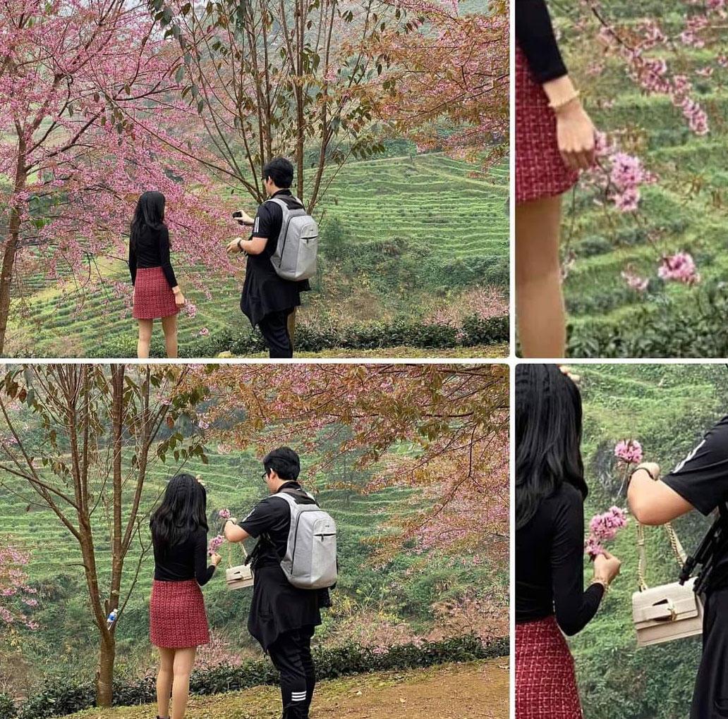 Bức xúc gái xinh rung cây để bạn tạo dáng hoa anh đào đang rơi, còn đăng clip lên mạng cười toe toét 3