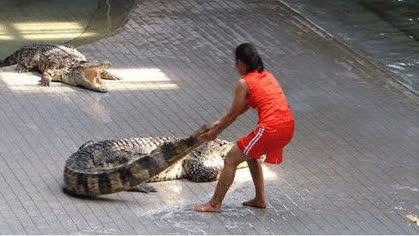 Nếu được trả lương bạc tỷ nhưng ngày ngày phải làm bạn với những con thú săn mồi dữ tợn này, liệu bạn dám làm hay không?