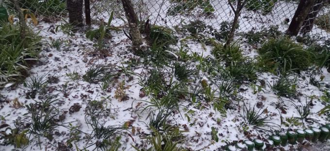 Clip: Tuyết đang rơi trắng xóa ở Y Tý (Lào Cai), khung cảnh đẹp chẳng khác gì trời Âu 9