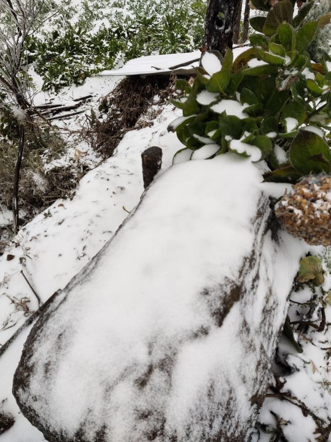 Clip: Tuyết đang rơi trắng xóa ở Y Tý (Lào Cai), khung cảnh đẹp chẳng khác gì trời Âu 7