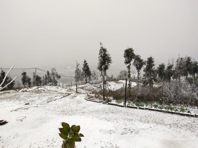 Clip: Tuyết đang rơi trắng xóa ở Y Tý (Lào Cai), khung cảnh đẹp chẳng khác gì trời Âu 6