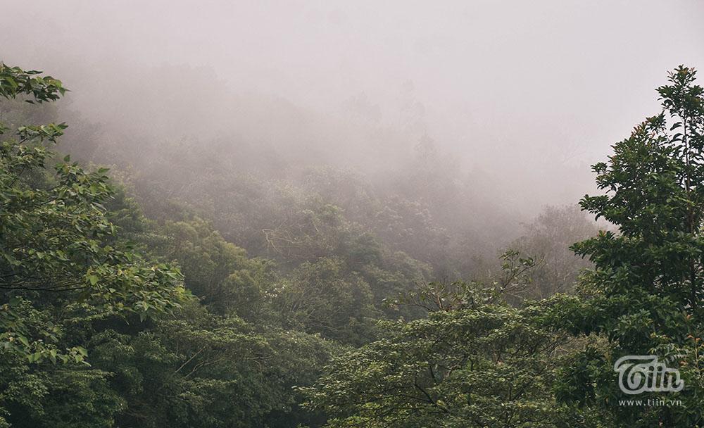 Đà Nẵng lạnh nhất trong 5 năm, mây mù phủ kín đường lên bán đảo Sơn Trà tạo cảnh tuyệt đẹp 13