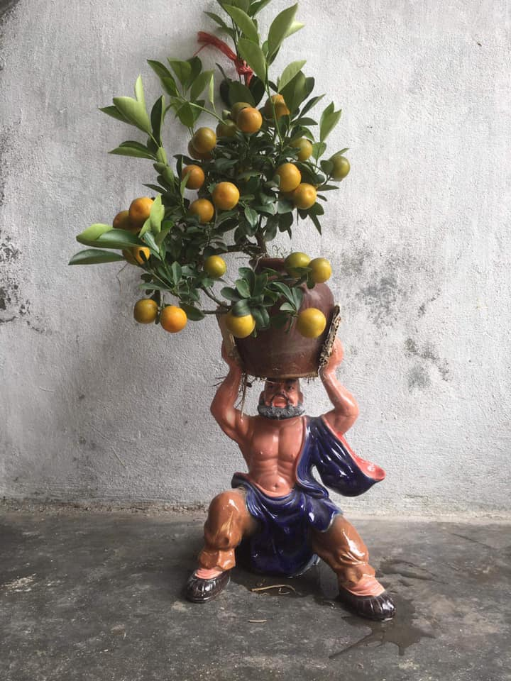 Đủ loại bonsai độc lạ mà cư dân mạng chia sẻ.