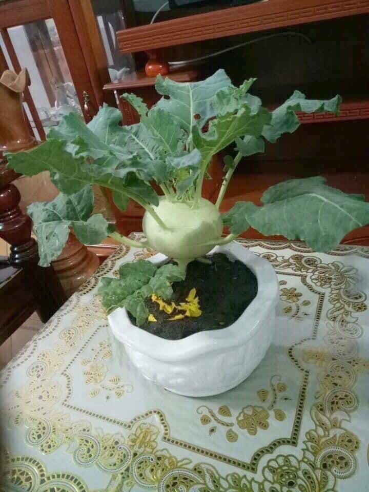 Chưa đến Tết, dân tình đã rần rần khoe toàn bonsai độc - lạ: Gây cười nhất là chậu táo lùn 'fake' mọc chi chít quả 3
