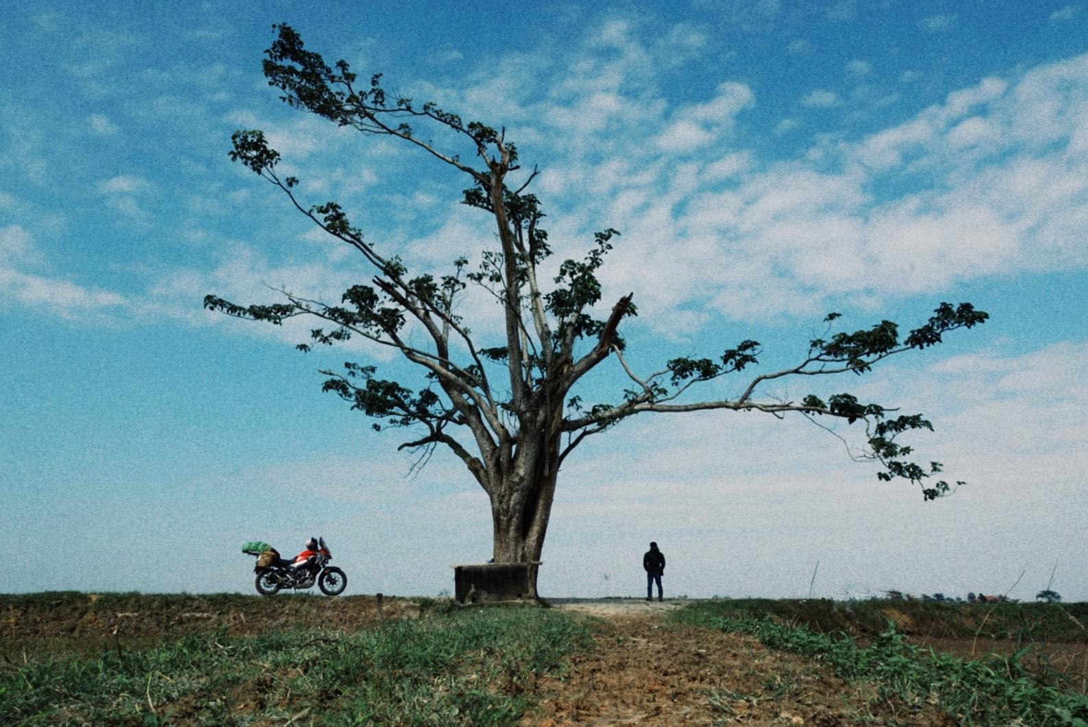 Sau màn tạo dáng 'cute' là bức ảnh đẹp không kể hết về cây ngô đồng ở Huế.