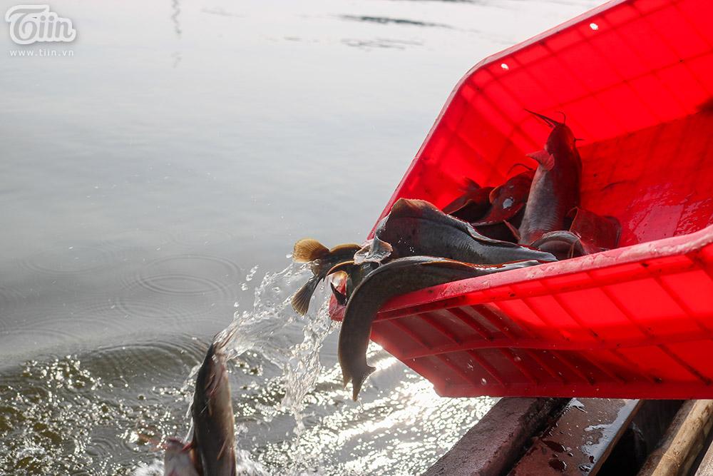 Ngoài cá chép chiếm số lượng lớn thì còn có các loại như cá chê, lươn, chim,… cũng được người dân mang đến đây thả.