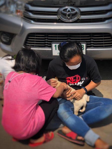 Mắc kẹt ở gầm xe ô tô, chú chó dũng cảm vượt qua đoạn đường 50km trước khi được người chủ cứu giúp 1