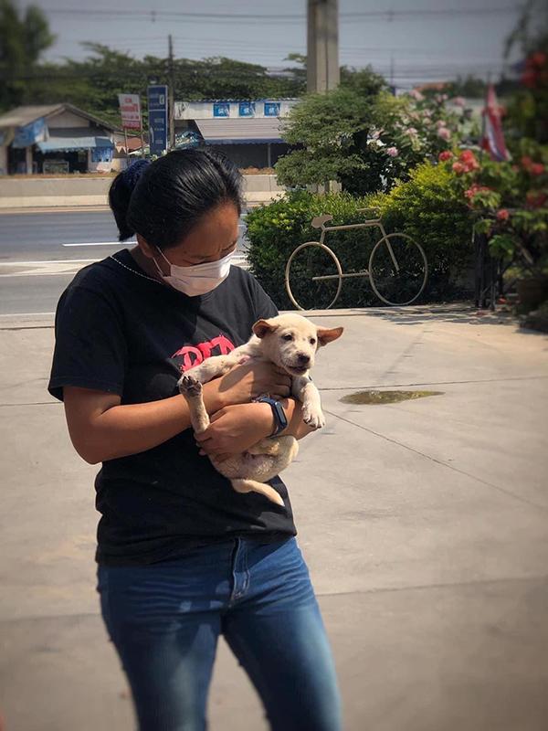 Chú chó được cứu ra từ gầm xe.
