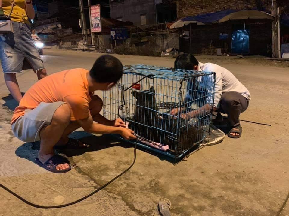 Chú chó đáng thương bị buộc chặt mõm bằng dây chun đã được đưa về Hà Nội điều trị 2