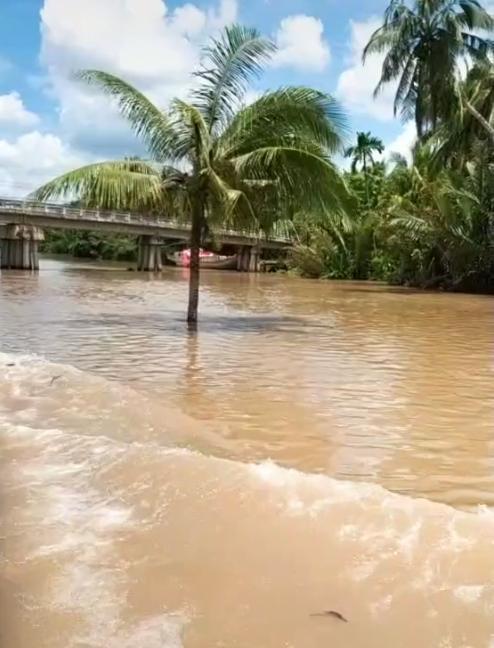 Cây dừa kỳ lạ mọc giữa lòng sông ở Bến Tre: Chuyện tưởng đùa nhưng hóa ra lại có thật! 1