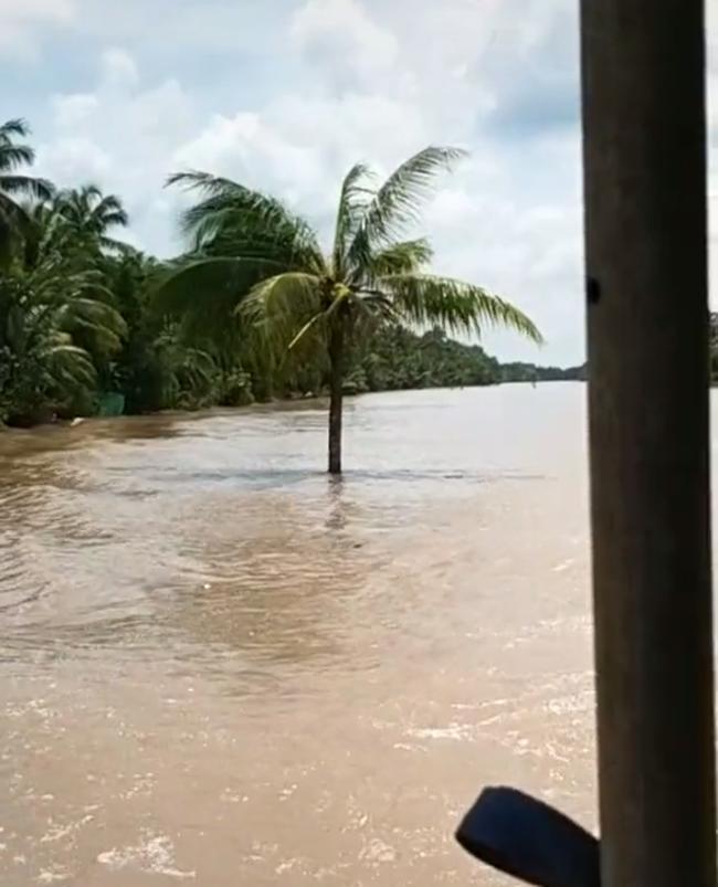 Cây dừa kỳ lạ mọc giữa lòng sông ở Bến Tre: Chuyện tưởng đùa nhưng hóa ra lại có thật! 3