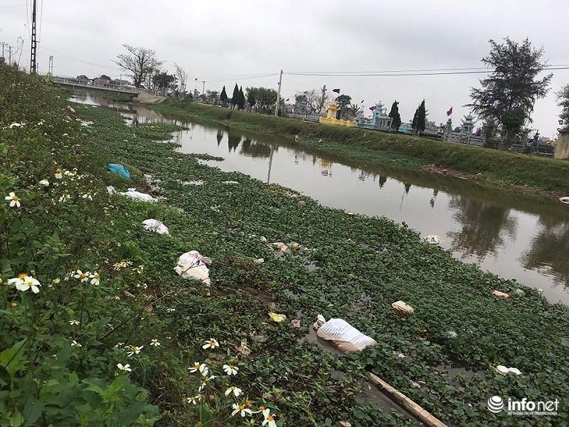 Cả một đoạn sông Ninh Hải chất đầy những bao đựng xác lợn chết ven sông.