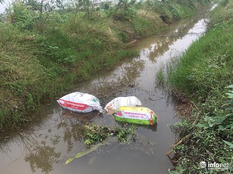 Tại Thị trấn Quỹ Nhất, không chỉ mang lợn chết ra sông, người dân còn mang ra vứt tại mương ngoài đồng ruộng.